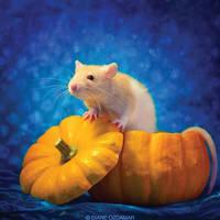 Feirefiz 3 - Fancy rat by DianePhotos