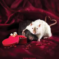 Ratties' Valentine's Day by DianePhotos