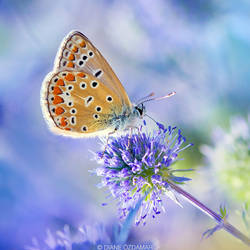 I'm blue, dabadee dabadaa... by DianePhotos