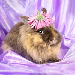 Tonka - rescue rabbit by DianePhotos