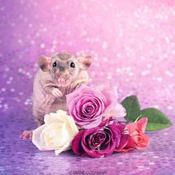 Pure Delight Luna - Fancy Rat by DianePhotos