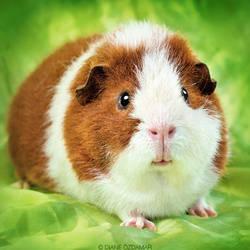Curious piggy by DianePhotos