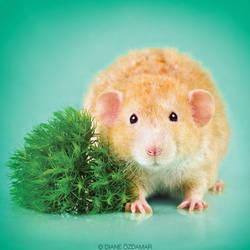 Dellingr - Fancy Rat by DianePhotos
