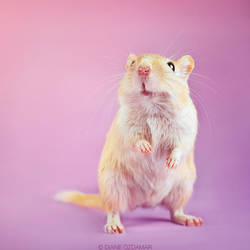 The gerbil that wanted to be a T-Rex by DianePhotos