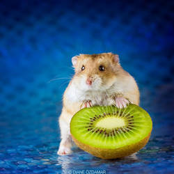 That's my kiwi!!! - Campbell hamster by DianePhotos