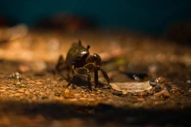 crabby crab by Obsidian-Eyes