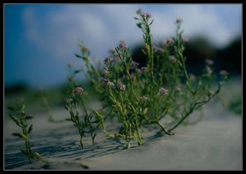 Beach Vegetation by ruindur