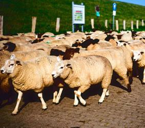 Herd Buddies by ruindur