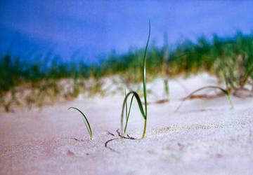 Beach Grass by ruindur