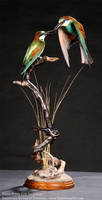 Taxidermy - Courting Bee-eaters by Illahie