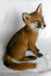 Taxidermy - Fox pup by Illahie