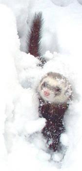 Snow ferret by Illahie