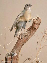 Taxidermy - Gryfinch by Illahie