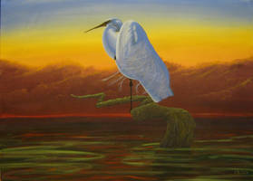 'Great White Egret' by tatopainting