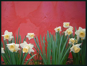 red wall floral by bluedown