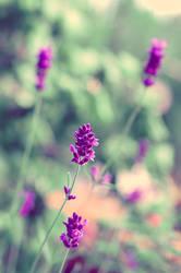 Perfume by o-kaykay