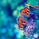Flutterbies by o-kaykay