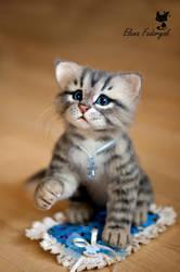 kitten Pufik by KittenBlackUA