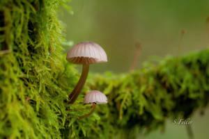 Pilz Reihe I   --   mushroom line I by saeppo