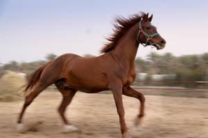 Horse by amai911
