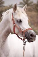 Horse, by amai911