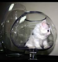 O.O Cat pic 1 O.O by amai911