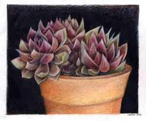 Succulents by gredandfeorge