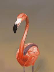 Flamingo Study by Justyne