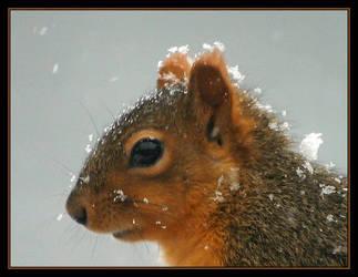 Snowy Squirrel by Justaminute