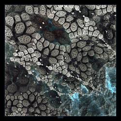 Corals by mehrdadart
