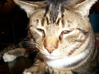 Happy Kitty Close Up by fallenangel78