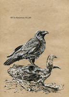 black Raven by Animal75Artist