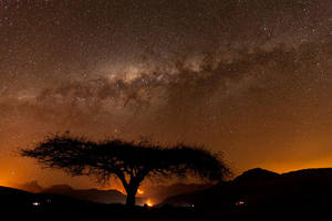 Acacia Silhouette by carlosthe