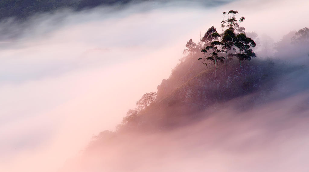 Misty Morning by carlosthe