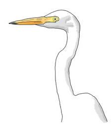 Egret by woomoocoo