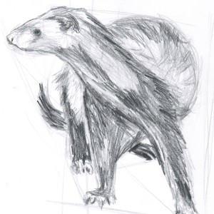 ferretwraith's Profile Picture