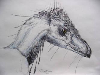 Velociraptor by Andalgalornis