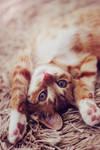 Cute Surrender by jausmiina