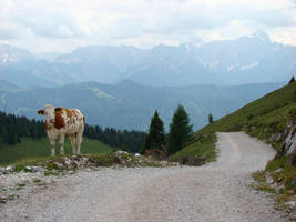 Alpine panorama with cow by Alistanniel