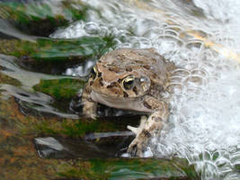 Bubble bath frog by Alistanniel
