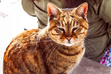 J'aime les chats ! by agridlet