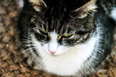 Les chats, c'est cool ! by agridlet