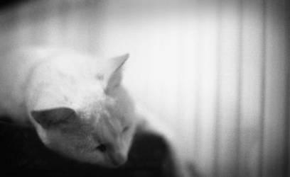 sleeping beauty by Petronallerr