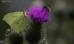 .: papillion :. by amygdalon