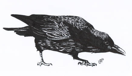 Crow by Misaky