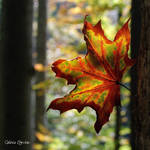 Autumn Symphony by unknown-dark