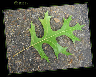 Green Leaf by Elorine