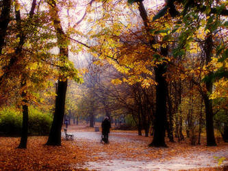 Colors of fall III by inaise