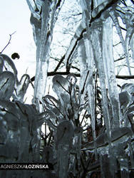 Garden of ice I by inaise