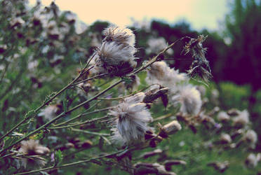 wind whistles in thistles by inaise